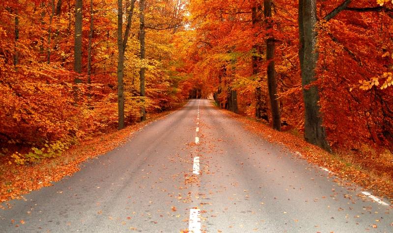 49971-autumn-road